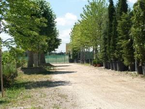 PEPINIERE RIERA Aix en Provence 4