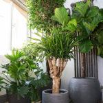 extraordinaire-plante-appartement-plantes-interieur-jardierie riera venelles