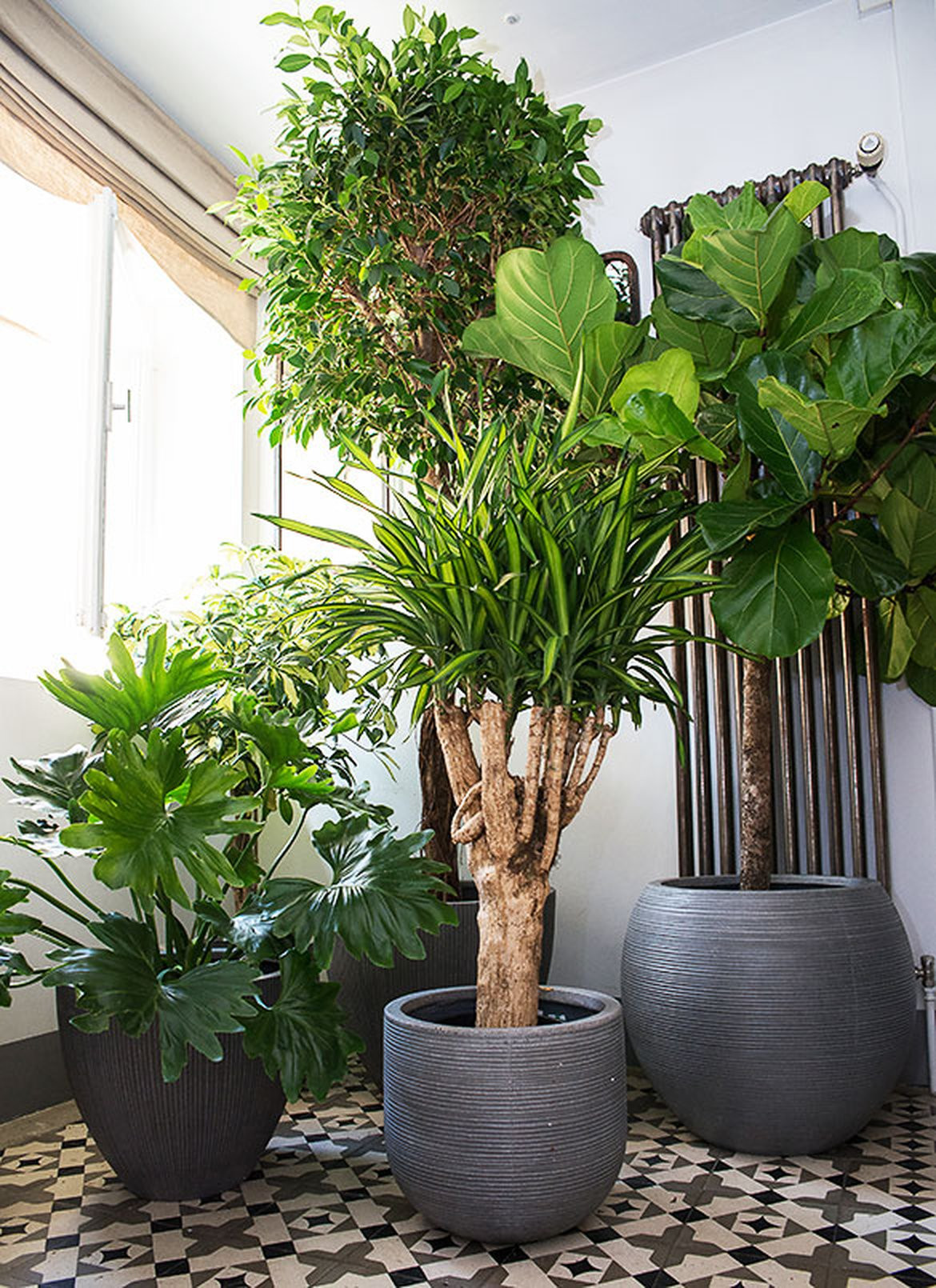 extraordinaire plante appartement plantes interieur jardierie riera venelles jardinerie riera. Black Bedroom Furniture Sets. Home Design Ideas
