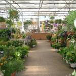 jardinerie 159