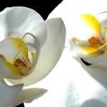orchidee venelles aix