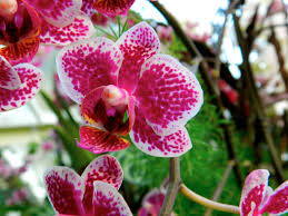 Les plus belles plantes d'hiver