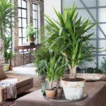 plantes interieures jardinerie riera venelles