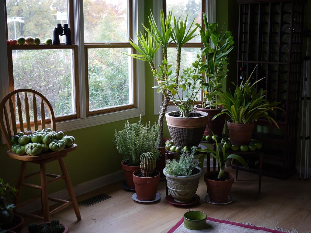plantes_interieur_pots_ombre_fenetre-jardienerie riera