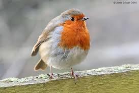Bien nourrir les oiseaux en hiver