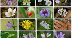 Fleurs en Septembre