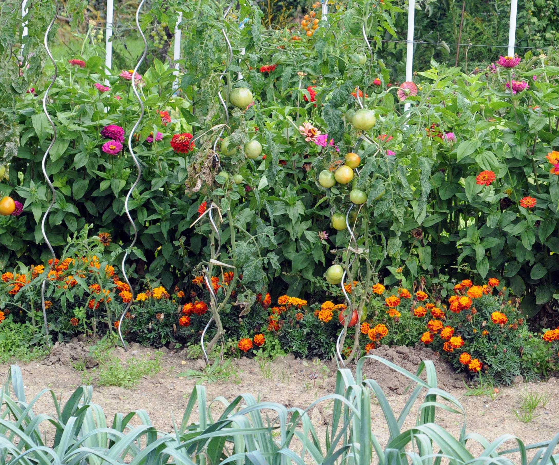 En juillet Jardin d ornement Jardinerie Riera