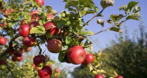 Arbres fruitiers en novembre