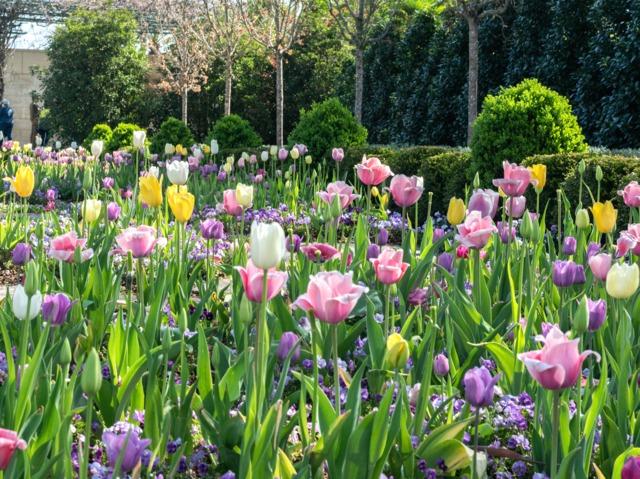 plantation des bulbes de printemps jardinerie riera. Black Bedroom Furniture Sets. Home Design Ideas