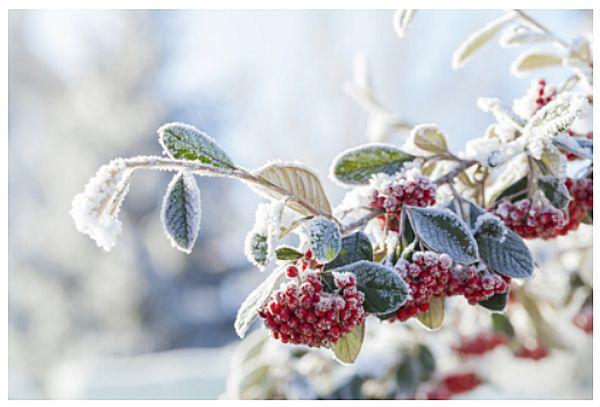 Protéger vos plantes en hiver