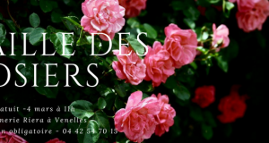 FB Taille des Rosiers 4 mars