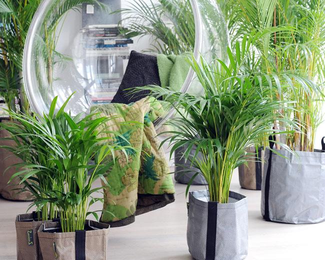 Plantes d polluantes jardinerie riera for Plantes jardinerie