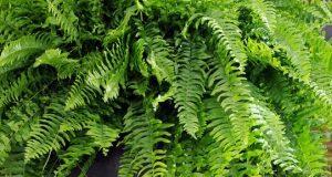 Plantes dépolluantes pour une maison saine