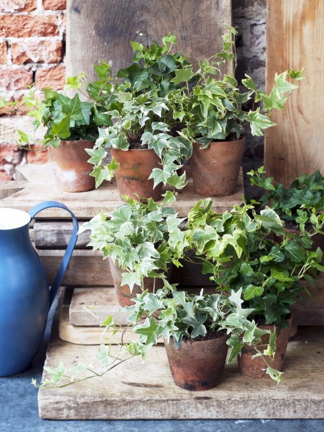 plantes d polluantes jardinerie riera. Black Bedroom Furniture Sets. Home Design Ideas