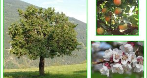 Avril au jardin fruitier – plantation et récolte