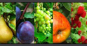Avril au jardin fruitier – entretien