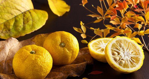 Le citron Yuzu