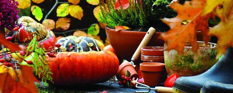 Octobre au jardin : quels travaux réaliser ?