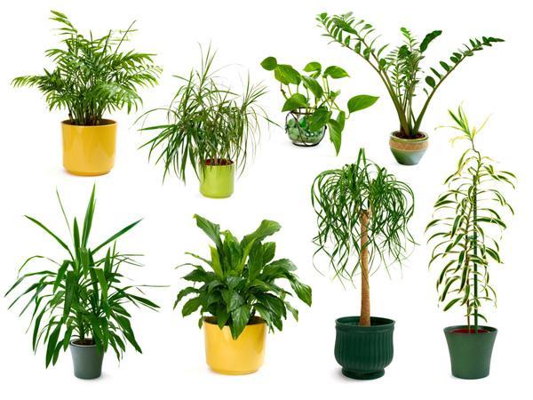 10 plantes d'intérieur dépolluantes