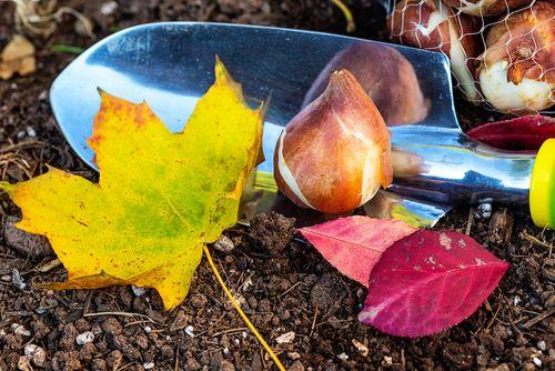 que-faire-dans-son-jardin-en-octobre_n
