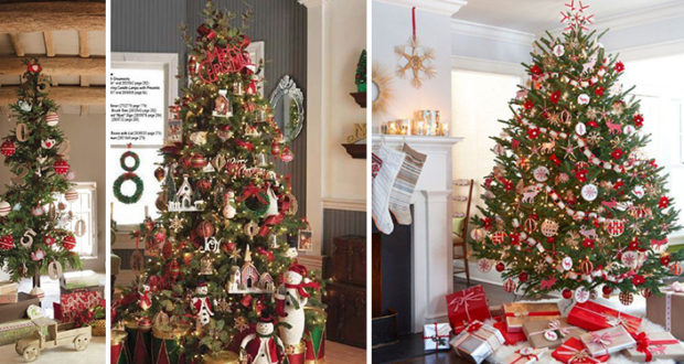 Choisir son sapin de Noël !