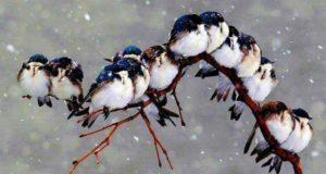 Le Noël des oiseaux chez Riera. – 20% du 13 au 16 Décembre'18