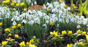 Que faire au jardin en février?