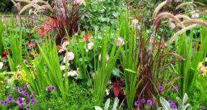 Mars au jardin d'ornement – Les fleurs