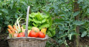 Bonnes et mauvaises associations de légumes au potager