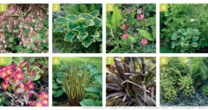 8 plantes idéales pour une culture sous les arbres