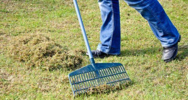 La mousse sur sa pelouse