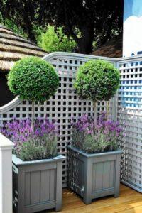 plantes exterieures en pot jardinerie riera 2