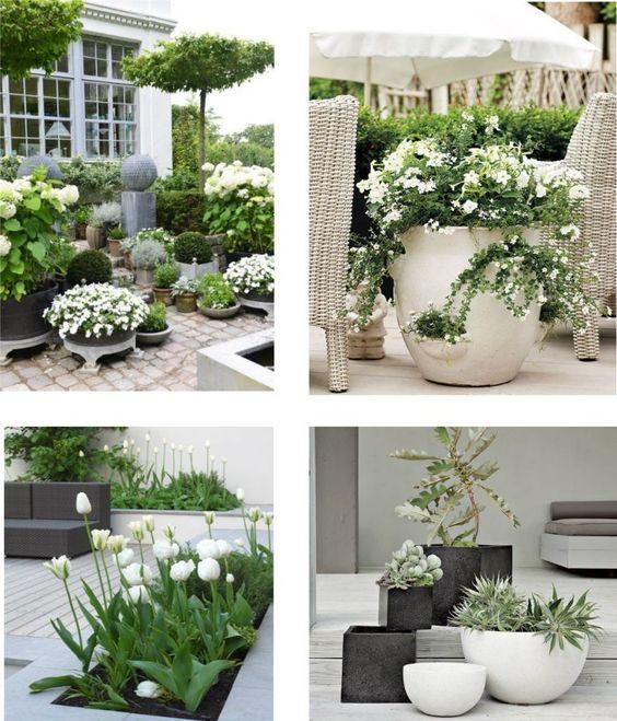 plantes exterieures en pot jardinerie riera 3