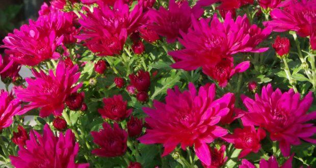 Les plantes de Toussaint
