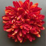 chrysantheme promo riera venelles2