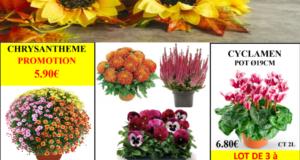 Les Fleures de la Toussaint chez Riera
