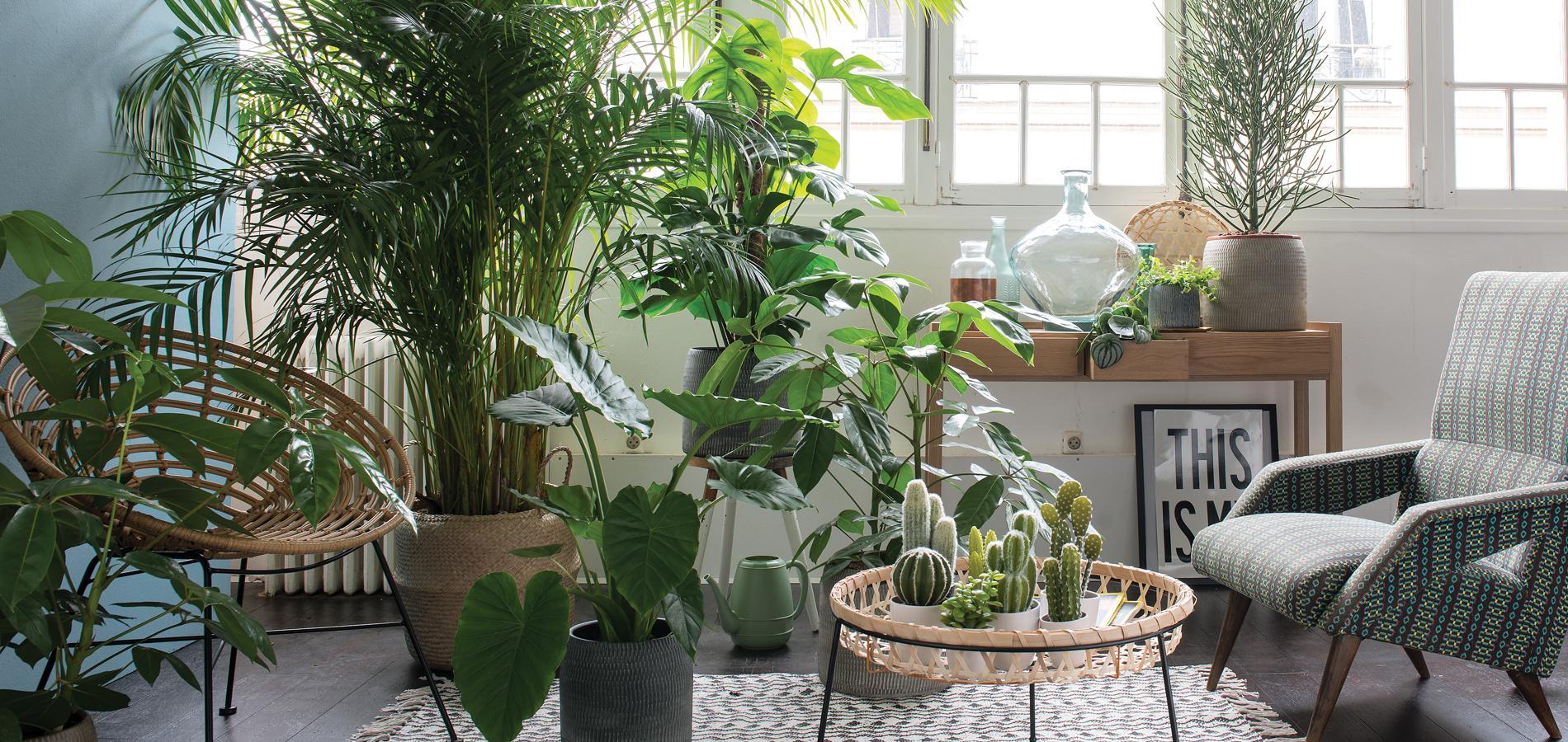 Etagere Pour Plantes Interieures plantes intérieures - jardinerie riera